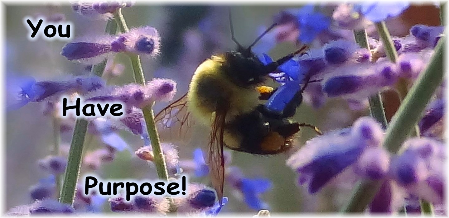 Bumble Bee - You Have Purpose