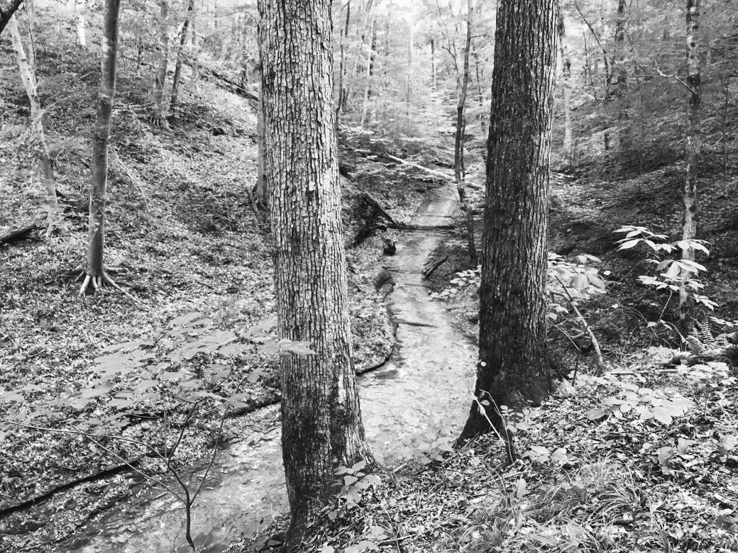 A black and white scene of a dried up creek bed in the forest.